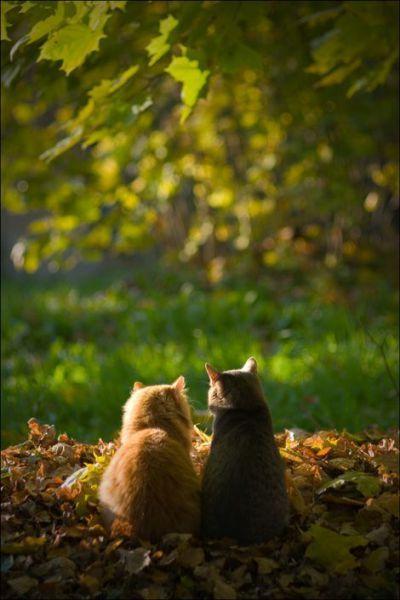 blog-bu_cat07