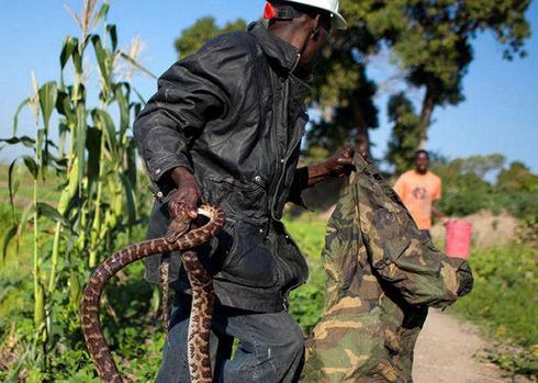 Snakehandler02
