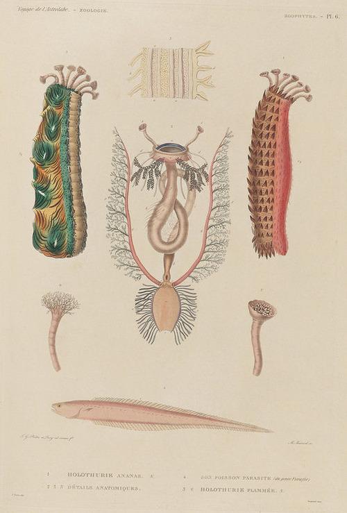 The Astrolabe Molluscs 20