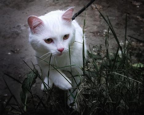 blog-bu_cat29
