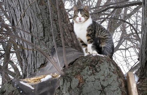 cat-tree-20110124