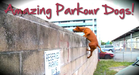 parkour-dog-roxy