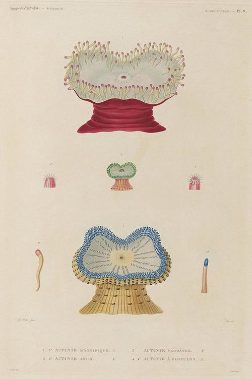 The Astrolabe Molluscs 22