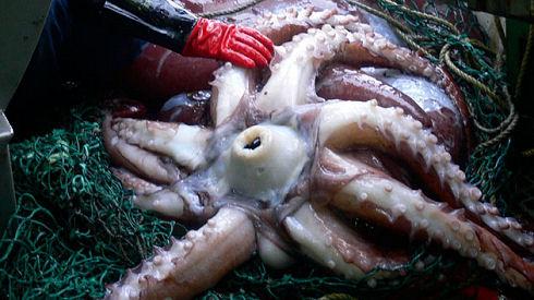 squid630