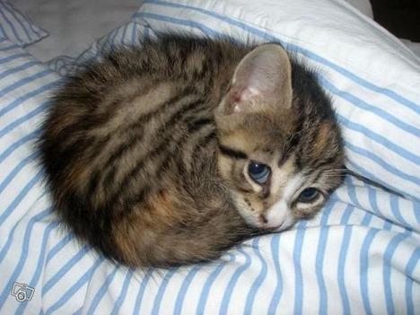 blog-bu_cat13
