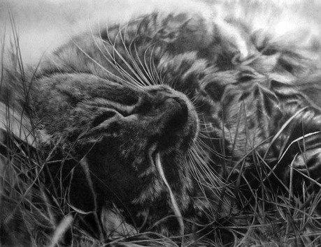 cat-pencil-drawing-1