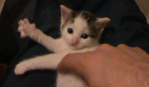 Kitten Plays Invisible Harp