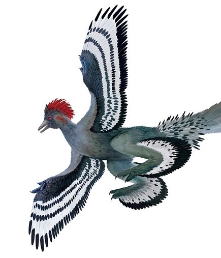 fossil-dinosaur-iridescent-feathers-anchiornis