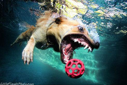 underwater_dogs_10