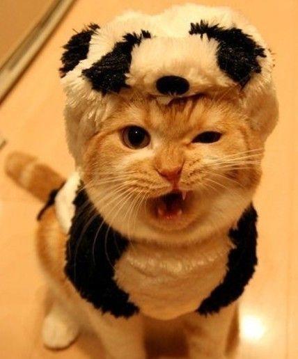 blog-bu_cat16