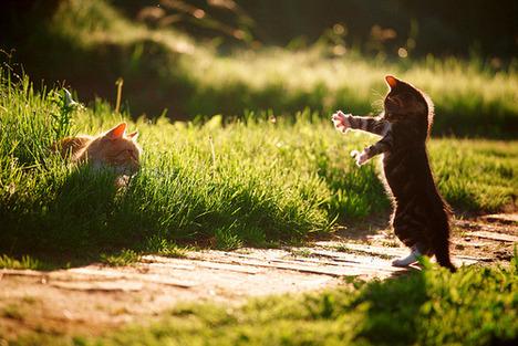 blog-bu_cat27
