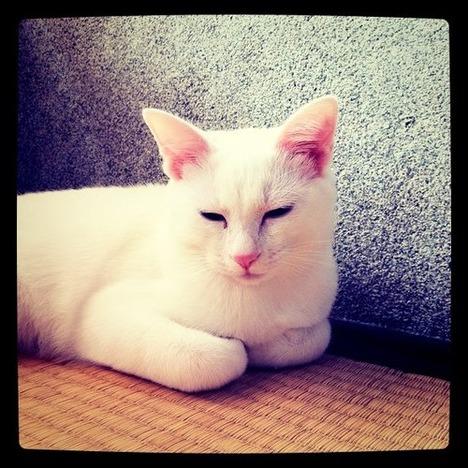 blog-bu_cat25