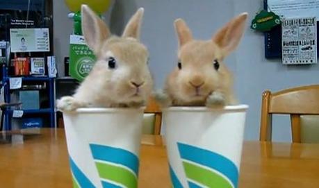 Twin Rabbit
