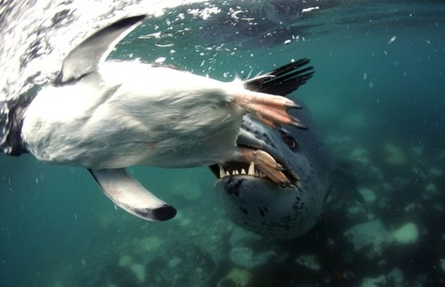 swimming_into_jaws_of_death_03