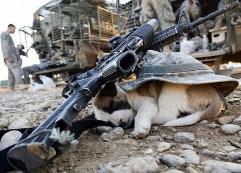the_pets_of_soldiers_640_25