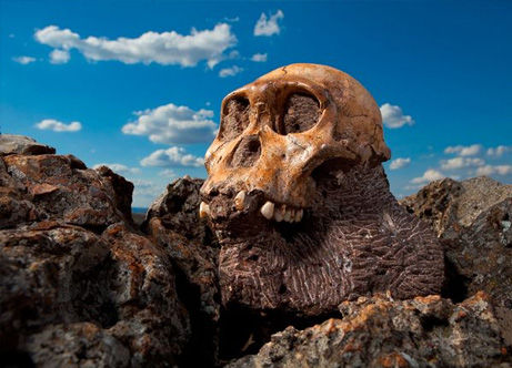 australopithecus-sediba-secrets-revealed