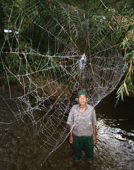 huge-spider-webs-kid_26176_big