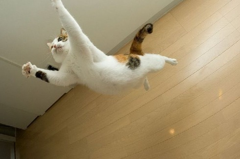 flying_cats_26