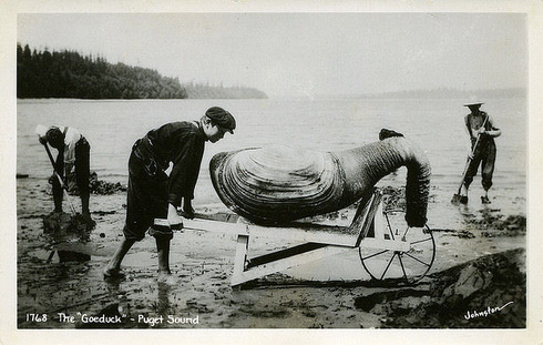 The early 1900s version of Photoshop 03