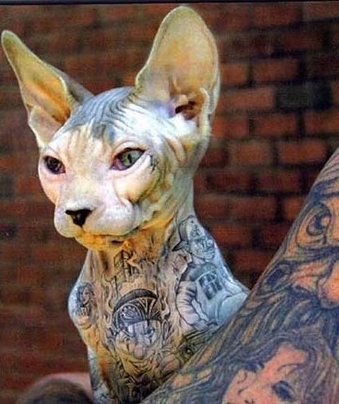 Tattooed-animals-05