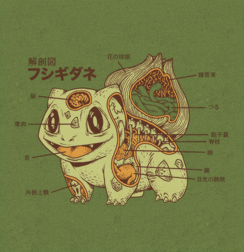 bulbasaur_anatomy_by_rye_bread-d5c4zzc