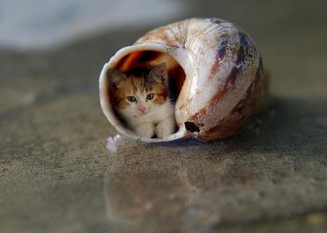 blog-bu_cat28