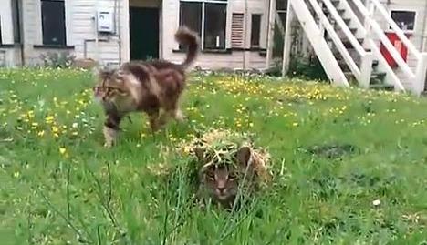 camouflage_cat