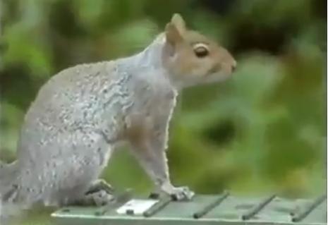 Best squirrel video