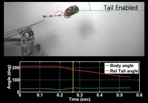 Tail Assisted Dynamic Self Righting