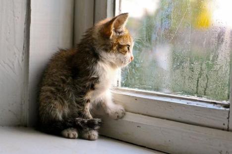 blog-bu_cat11