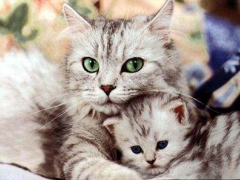 blog-bu_cat05