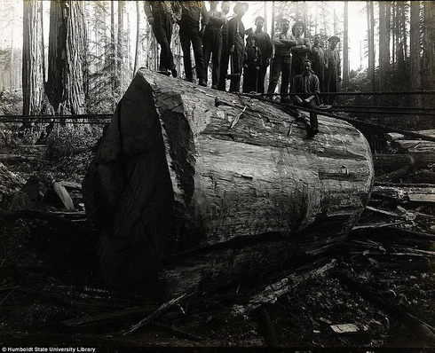 lumberjacks-redwood-5[5]