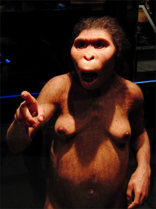 Lucy_Australopithecus_Restoration_model