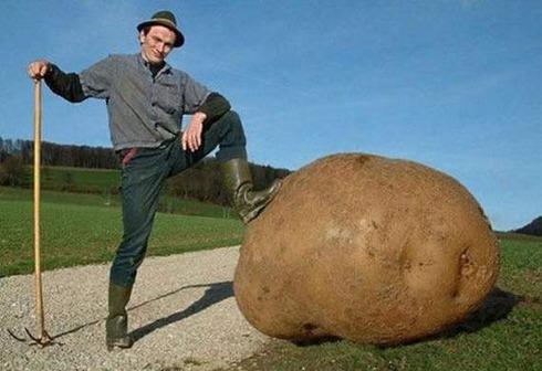 giant-vegetable01