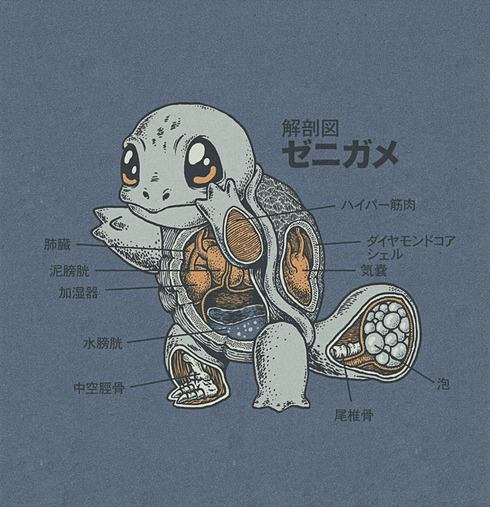 squirtle_anatomy_by_rye_bread-d5go7lf