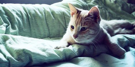blog-bu_cat18