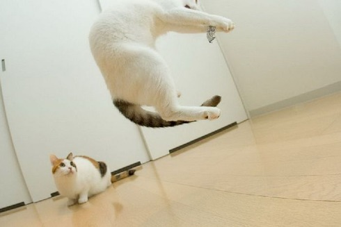 flying_cats_10