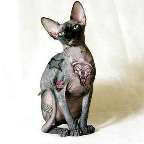Tattooed-animals-01