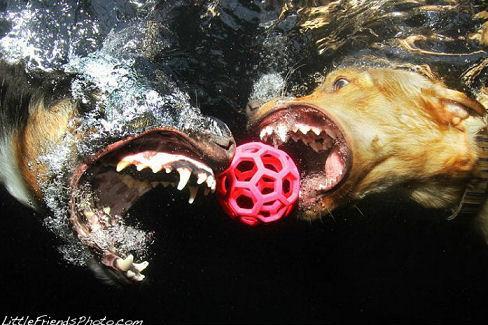underwater_dogs_18