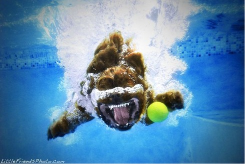 underwater_dogs_09