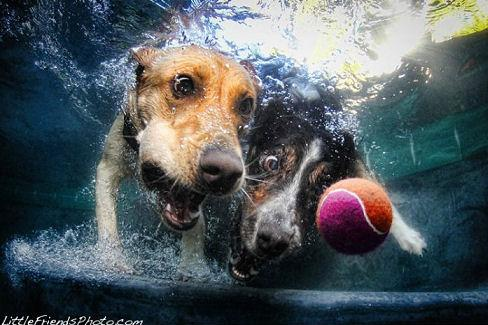 underwater_dogs_15