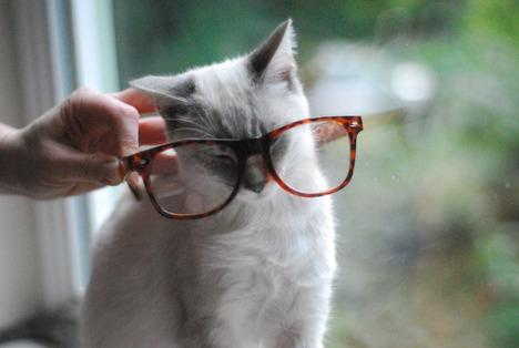 blog-bu_cat02