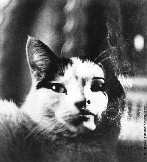 Interesting Old Photos of Cats (15)