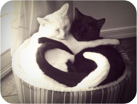 blog-bu_cat26
