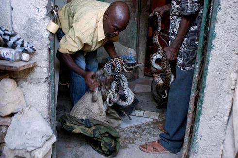 Snakehandler08