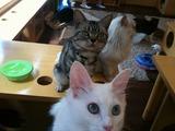 群がる猫たち