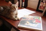 猫カフェ本と