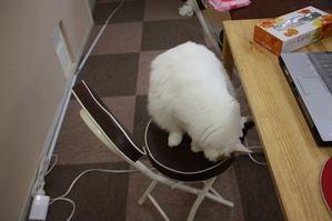 未練がましい猫。