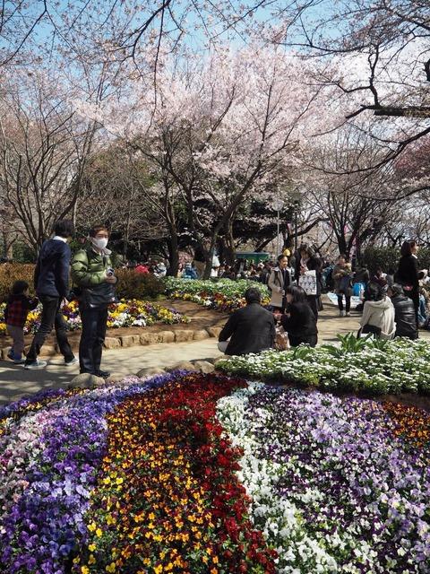 お花見2017_0