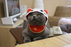 お地…。招き猫!!
